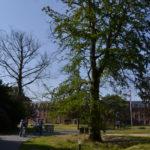 Alverna_terrein_bomenkap_puin_Marilou
